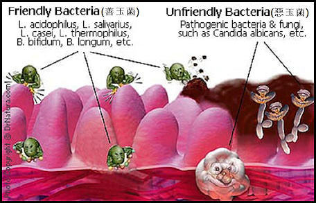Friendly bacteria vs. unfriendly bacteria.